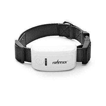 Le collier GPS pour chat, un accessoire de localisation et de précision irréprochable