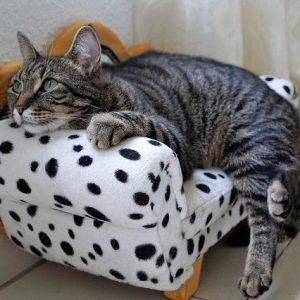 Comment bien prendre soin de votre chat?